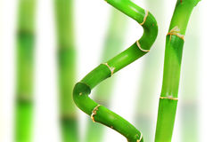 Oriental Bamboo Stock Photo
