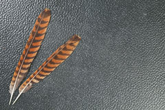Oriental bay owl feather represent the bird feather background c Royalty Free Stock Images