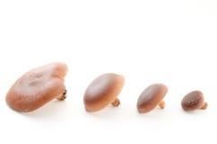 Oriental black mushroom Royalty Free Stock Image