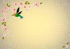 Oriental blossom birds background. Oriental cherry blossom, birds on grunge background Royalty Free Stock Photos
