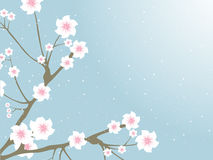 Oriental branches with blossoms and buds Royalty Free Stock Images