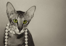 Oriental cat Royalty Free Stock Image