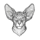 Oriental cat with big ears Hand drawn illustration for tattoo, emblem, badge, logo, patch. Oriental cat with big ears Hand drawn image for tattoo, emblem, badge royalty free stock image