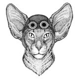 Oriental cat with big ears wearing aviator hat Motorcycle hat with glasses for biker Illustration for motorcycle or Stock Image