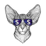 Oriental cat with big ears wearing glasses with dollar sign Illustration with wild animal for t-shirt, tattoo sketch Stock Photo