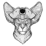 Oriental cat with big ears wearing pirate hat Cocked hat, tricorn Sailor, seaman, mariner, or seafarer. Wild animal wearing pirate cocket hat Stock Images