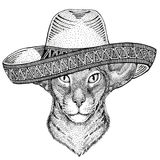 Oriental cat with big ears Wild animal wearing sombrero Mexico Fiesta Mexican party illustration Wild west. Wild animal wearing sombrero Mexico Fiesta Mexican Royalty Free Stock Photography