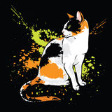 Oriental cat on black background. With paint splash Royalty Free Stock Photography