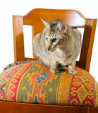 Oriental cat sitting on chair. Young grey oriental cat sitting on a beautiful eastern chair Royalty Free Stock Photography