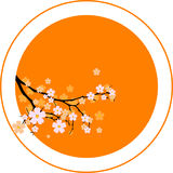 Oriental cherry Royalty Free Stock Photos
