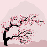 Oriental cherry blossoming Stock Photo