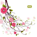Oriental designed card with branches of japanese cherry flowers. Hieroglyph is sakura. Stock Images