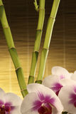 Oriental Spa Elements Stock Images