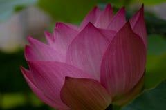 Oriental flora for enlightening stock image