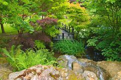 Oriental Garden. Oriental style garden with maple trees, boardwalk and waterfall Royalty Free Stock Images