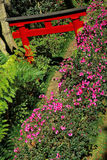 Oriental garden. Madeira. Public oriental garden in Funchal, Madeira island royalty free stock photo