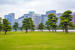 Oriental park in Tokyo Royalty Free Stock Image
