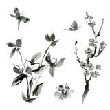 Oriental plants: sakura; cherry; roseship, hand drawn ink sumi-e Stock Photo