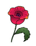 Oriental red poppy Royalty Free Stock Images