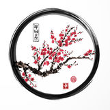 Oriental sakura cherry tree blossoming in black enso zen circle on white background. Contains hieroglyphs - zen, freedom. Nature, happiness. Traditional Stock Photography