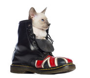 Oriental Shorthair kitten sitting in boot Royalty Free Stock Photography