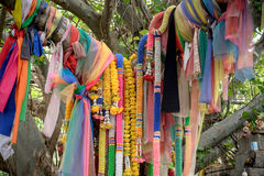 Oriental spirit tree Royalty Free Stock Image