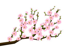 Free Oriental Style Painting, Cherry Blossom In Spring Stock Images - 52472034
