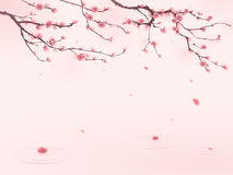 Oriental style painting, cherry blossom in spring Royalty Free Stock Photography