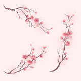 Oriental style painting, cherry blossom in spring Royalty Free Stock Photo