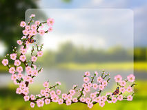Oriental style painting, cherry blossom in spring Stock Images