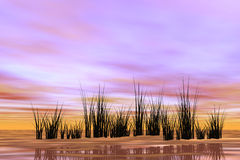 Oriental sunrise. Stock Photo: digitally created warm background with reeds Royalty Free Stock Image