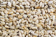 Oriental sweets Kozinaki. Sunflower seeds in caramel close up Stock Image