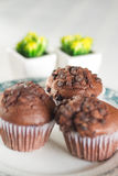 Oriental Tea with chocolate muffins. On elegant porcelain dish Stock Image
