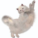 Oriental White Cat Stock Photography