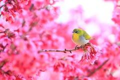 Oriental White-eye and flower stock photo