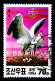 Oriental White Stork (Ciconia ciconia boyciana), Endangered bird. MOSCOW, RUSSIA - NOVEMBER 25, 2017: A stamp printed in Democratic People's stock photography