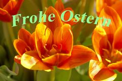 Orientale felice, tulipano Immagini Stock Libere da Diritti