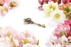 Orientalis Helleborus λουλουδιών Hellebore καρδιών -καρδιά-shapde στοκ εικόνες