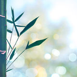 Orientalische abstrakte Hintergründe mit Bambusgras Lizenzfreies Stockfoto