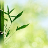 Orientalische abstrakte Hintergründe mit Bambusgras Stockbild