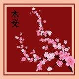 Orientalische Kirsche Stockfotos
