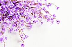 Orientalische Kirsche in der Blüte Lizenzfreie Stockbilder