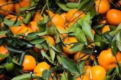 Orientalische Orangen Lizenzfreie Stockbilder
