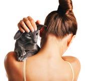 Orientalische Shorthair-Katze auf einer Schulter Stockbilder