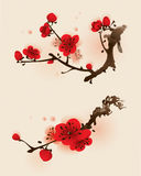 Orientalischer Artanstrich, Pflaumeblüte im Frühjahr Lizenzfreies Stockfoto