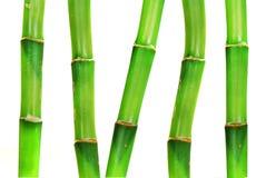Orientalischer Bambus Lizenzfreie Stockfotos