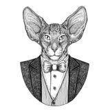 Orientalisk katt med den stor drog illustrationen för öraHipster djur hand för tatueringen, emblem, emblem, logo, lapp, t-skjorta royaltyfri bild