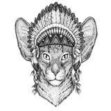 Orientalisk katt med det lösa djuret för stora öron som bär den indiska hatthuvudbonaden med stam- illustraton fjäderBoho för etn vektor illustrationer