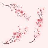 Orientalisk stilmålning, körsbärsröd blomning i vår Royaltyfri Foto