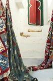 orientaliska katter Arkivbild